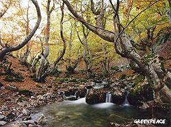bosquesblog021