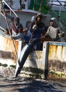 pesca_pacifico1