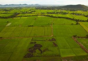 Campo de arroz en Thailandia
