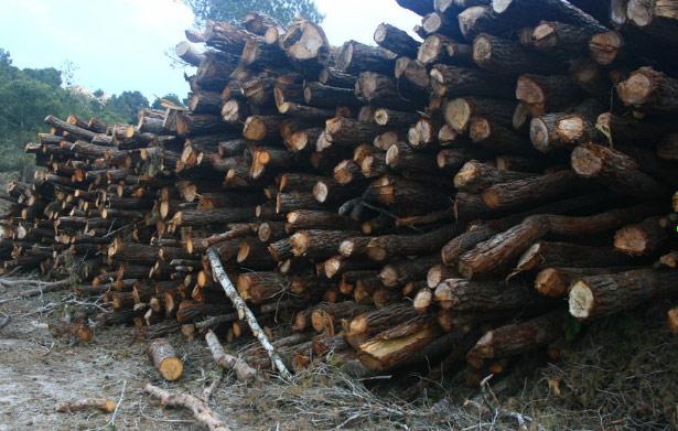 Fotodenuncia es malo cortar rboles el blog de greenpeace for Como talar un arbol